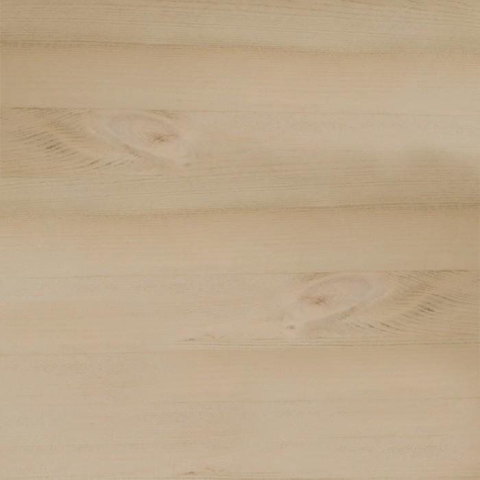 borovice krémová